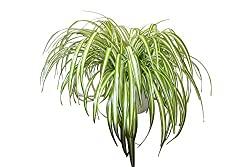 Top 10 des plantes d'intérieur