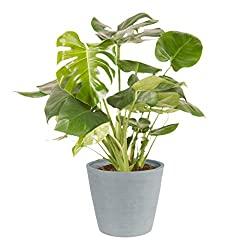Top 10 des plantes d'intérieur (et comment en prendre soin)